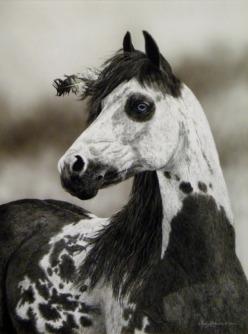My horse in 2014